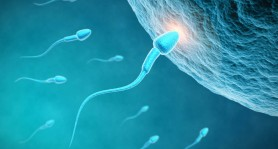 Spermbots-espermatozoides-robot-controlados-por-magnetismo